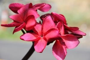 botanical 024